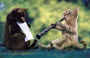 cats recorder