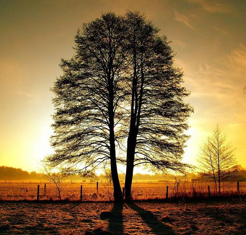 unity tree